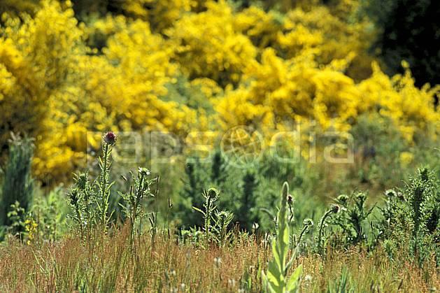 ed3182-20LE : Patagonie.  Amérique du sud, Amérique Latine, Amérique, fleur, C02, C01 flore, moyenne montagne, voyage aventure (Argentine).