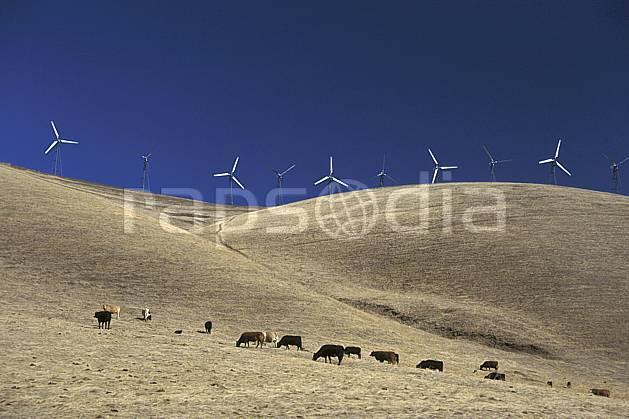 ee0671-25LE : Champ d'Éoliennes près de San Francisco, Californie.  Amérique du nord, ciel bleu, éolienne, herbe, vache, C02, C01 environnement, faune, voyage aventure (Usa).