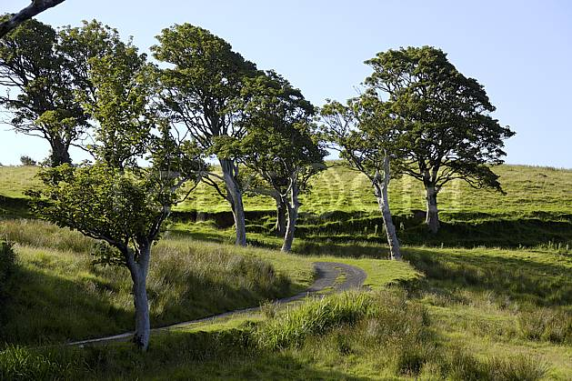 ee071815LE : Route irlandaise et arbres, Benmore (Fairhead), Murlough Bay, Ulster (Irlande du Nord).  Europe, CEE, sentier, sentier, C02 arbre, environnement, paysage, voyage aventure (Irlande Royaume-Uni).