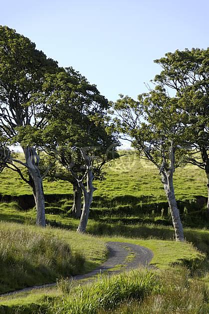 ee071816LE : Route irlandaise et arbres, Benmore (Fairhead), Murlough Bay, Ulster (Irlande du Nord).  Europe, CEE, sentier, sentier, C02 arbre, environnement, paysage, voyage aventure (Irlande Royaume-Uni).