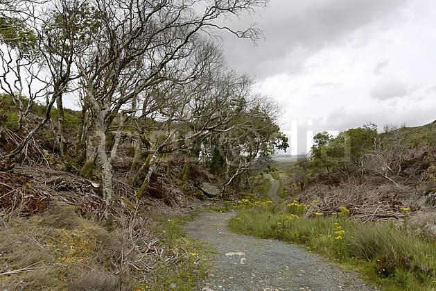 ee071995LE : Sentier près de Glenveagh Castle, Donegal.  Europe, EEC, road tree, environment, heritage, landscape, adventure trip (Ireland).