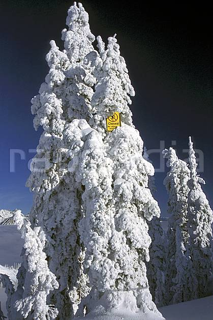 ee2604-29LE : Panneaux d'interdiction de skier, Alberta.  Amérique du nord, Amérique, ciel bleu, panneau, poudreuse, C02, C01 arbre, environnement, voyage aventure (Canada).
