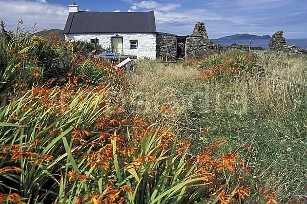 ee3173-34LE : Paysage d'Irlande.  Europe, CEE, ferme, fleur, C02, C01 environnement, flore, habitation, patrimoine, voyage aventure (Irlande).
