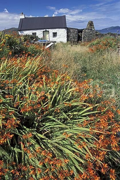 ee3173-35LE : Paysage d'Irlande.  Europe, CEE, ferme, fleur, C02, C01 environnement, flore, habitation, patrimoine, voyage aventure (Irlande).