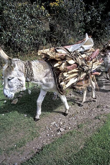 ef2716-28LE : Pérou, Dans la Quebrada Carhuascancha.  Amérique du sud, Amérique Latine, sentier, âne, C02, C01 faune, transport, voyage aventure (Pérou).