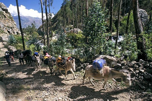 ef2725-27LE : Ascension de l'Alpamayo, Huaripampa, Quebrada Santa Cruz.  Amérique du sud, Amérique Latine, sentier, ciel nuageux, âne, C02, C01 faune, transport, voyage aventure (Pérou).
