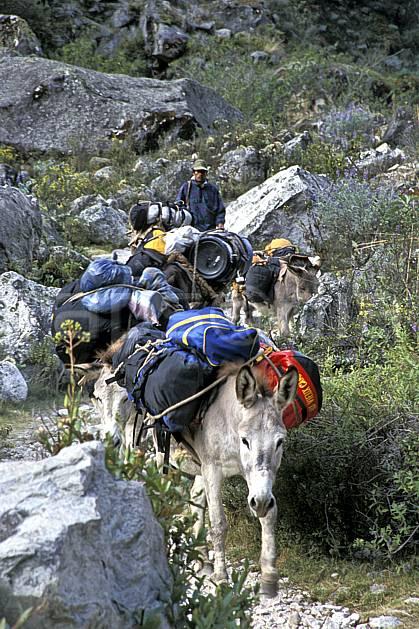 ef2733-25LE : Ascension de l'Alpamayo, Quebrada Santa Cruz.  Amérique du sud, Amérique Latine, sentier, âne, C02, C01 faune, transport, voyage aventure (Pérou).