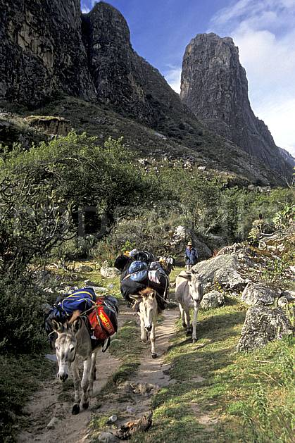 ef2733-28LE : Ascension de l'Alpamayo, Quebrada Santa Cruz.  Amérique du sud, Amérique Latine, sentier, ciel nuageux, herbe, âne, C02, C01 faune, transport, voyage aventure (Pérou).