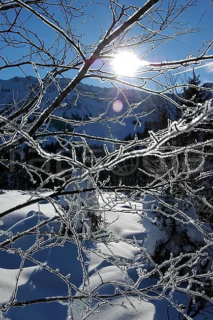 fa050095LE : Branches givrées. Bavière.  Europe, CEE, C02, C01 arbre, flore, forêt, moyenne montagne, paysage, soleil, textures et fonds (Allemagne).