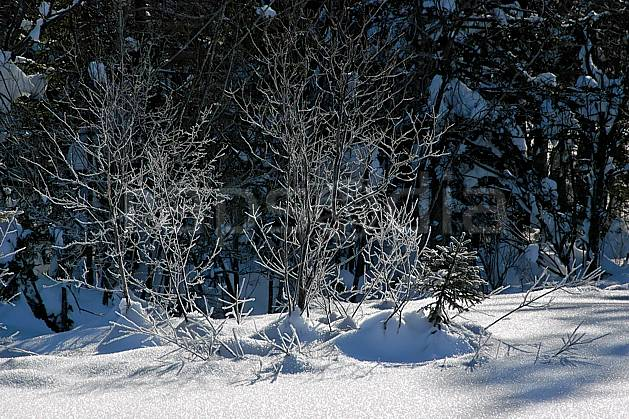 fa050157LE : Branches givrées. Bavière.  Europe, CEE, givre, C02, C01 arbre, forêt, moyenne montagne, paysage, textures et fonds (Allemagne).
