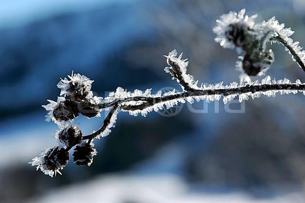 fa050164LE : Branches givrées. Bavière.  Europe, CEE, givre, C02, C01 arbre, flore, gros plan, textures et fonds (Allemagne).
