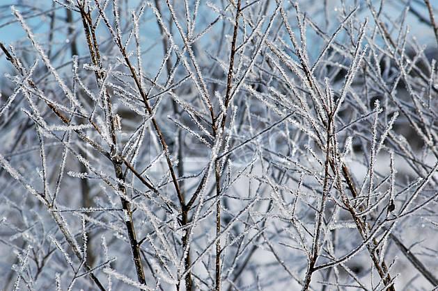 fa050179LE : Branches givrées. Bavière.  Europe, CEE, givre, C02, C01 arbre, flore, forêt, gros plan, textures et fonds (Allemagne).