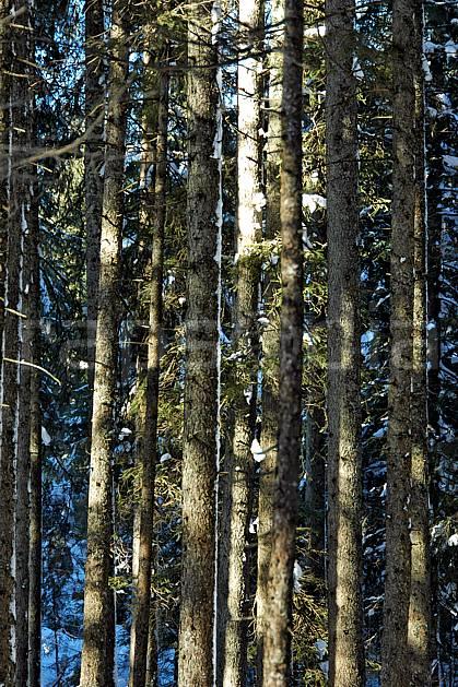 fa050547LE : Forêt d'épicéas. Bavière.  Europe, CEE, épicéa, tronc, C02, C01 arbre, flore, forêt, textures et fonds (Allemagne).