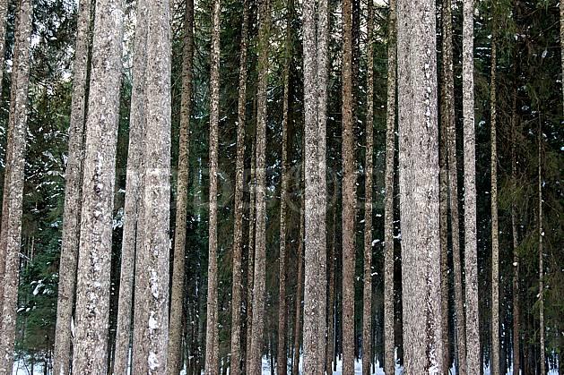 fa050582LE : Forêt d'épicéas. Bavière.  Europe, CEE, épicéa, tronc, C02, C01 arbre, flore, forêt, textures et fonds (Allemagne).