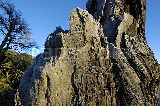 fa054736LE : San Carlos de Bariloche, Patagonie.  Amérique du sud, Amérique Latine, Amérique, tronc, écorce, C02, C01 moyenne montagne, paysage, textures et fonds, voyage aventure (Argentine).