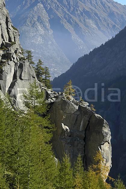 fa055810LE : Valle dell Orco.  Europe, CEE, épicéa, C02, C01 arbre, forêt, moyenne montagne, paysage, textures et fonds (Italie).
