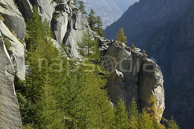 fa055811LE : Valle dell Orco.  Europe, CEE, épicéa, C02, C01 arbre, forêt, moyenne montagne, paysage, textures et fonds (Italie).