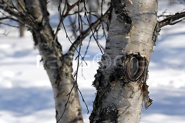 fa061659LE : Boulot.  Europe, CEE, écorce, C02, C01 arbre, forêt, textures et fonds (Finlande).