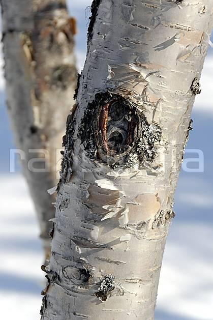 fa061660LE : Boulot.  Europe, CEE, écorce, C02, C01 arbre, forêt, textures et fonds (Finlande).