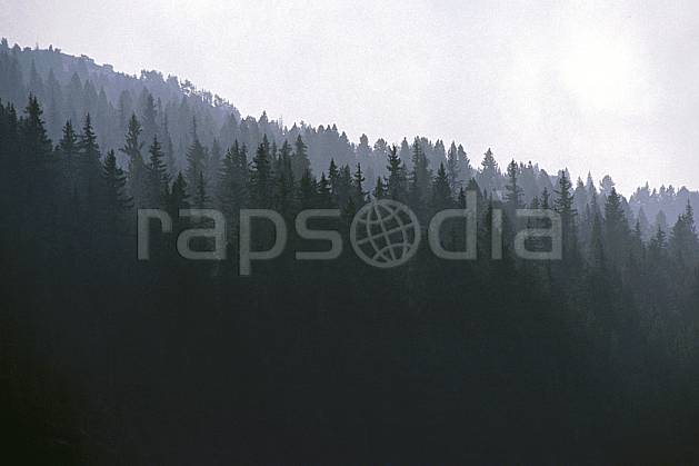 fa0849-17LE royalty free forêt au matin, Europe, EEC, tree, forest, textures and backgrounds (France).
