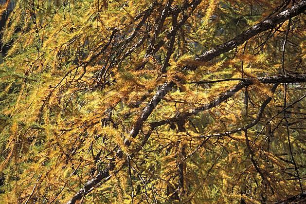fa0854-12LE : Branches de sapin.  Europe, CEE, C02, C01 arbre, textures et fonds (France).