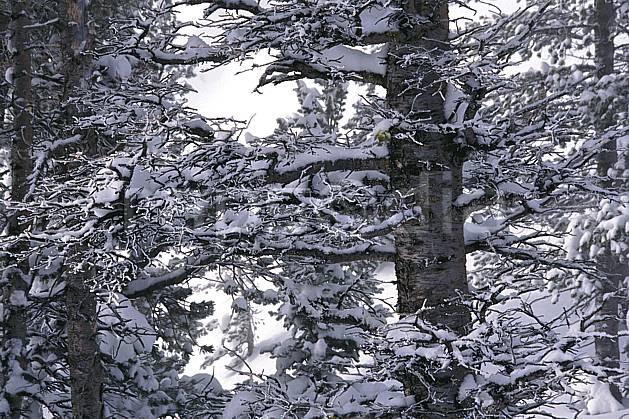 fa1998-32LE : Grand Teton National Park, Wyoming.  Amérique du nord, C02, C01 arbre, textures et fonds (Usa).