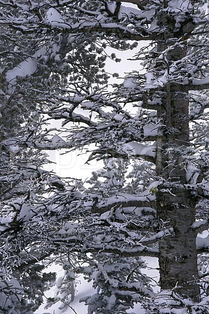 fa1998-36LE : Grand Teton National Park, Wyoming.  Amérique du nord, C02, C01 arbre, textures et fonds (Usa).