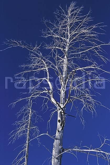 fa2007-10LE : Grand Teton National Park, Wyoming.  Amérique du nord, C02, C01 arbre, textures et fonds (Usa).