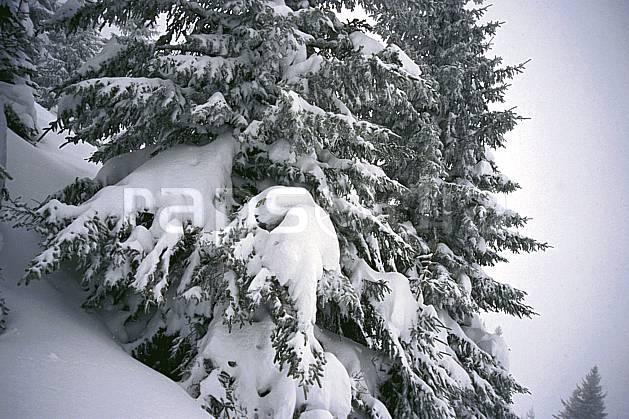 fa2122-01LE : La Clusaz, Haute-Savoie.  Europe, CEE, C02, C01 arbre, textures et fonds, Annecy 2018 (France).