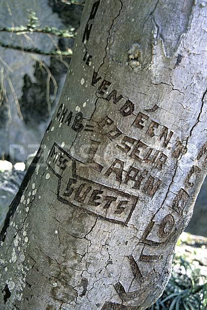 fa2886-08LE : Tronc avec inscription.  Europe, CEE, tronc, C02, C01 arbre, textures et fonds (France).