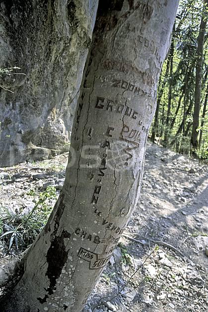 fa2886-09LE : Tronc d'arbre.  Europe, CEE, tronc, C02, C01 arbre, textures et fonds (France).