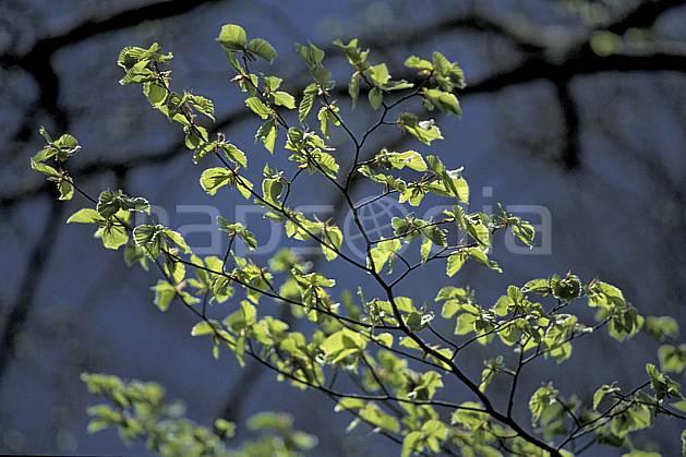 fa2886-10LE : Branche.  Europe, CEE, C02, C01 arbre, textures et fonds (France).