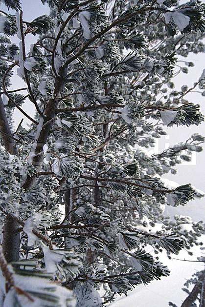 fa2924-30LE : Arbre, Jackson Hole, Wyoming.  Amérique du nord, C02, C01 arbre, textures et fonds (Usa).