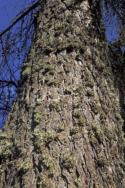 fa2966-30LE : Tronc.  Europe, CEE, tronc, C02, C01 arbre, textures et fonds, gros plan (France).