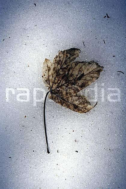 fa3001-05LE : Feuille morte.  Europe, CEE, C02, C01 flore, textures et fonds (France).