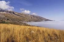 Dévoluy, Hautes-Alpes, Alpes, ref aa0473-38LE