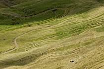 Morzine, Avoriaz, sous la Pointe de Fornet, Haute-Savoie, Alpes, ref aa055691LE
