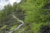 Sentier au Montenvers, vallée de Chamonix, Massif du Mont Blanc, Haute-Savoie, ref aa062492GE