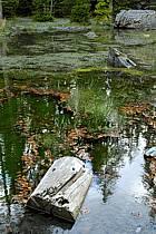 Plateau d'Assy, Lac Vert, Haute-Savoie, ref aa063407GE