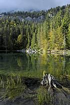 Plateau d'Assy, Lac Vert, Haute-Savoie, ref aa063413GE