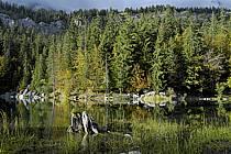 Plateau d'Assy, Lac Vert, Haute-Savoie, ref aa063414GE