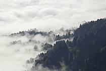 Forêt alpine dans la brume, massif des Aravis - Alpin forest in the mist, Aravis massif, ref aa082257LE