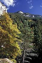 Forêt, Le Pas du Roc, Haute-Savoie, Alpes, ref aa0841-16LE