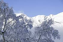 Arbres enneigés, Le Jaillet - Snowy trees, Le Jaillet, ref aa090010LE