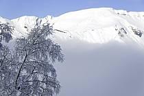 Arbres enneigés, Le Jaillet - Snowy trees, Le Jaillet, ref aa090011LE