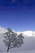 Arbres enneigés, Le Jaillet - Snowy trees, Le Jaillet, ref aa090012LE