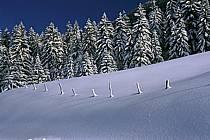 Forêt, Jura, Alpes, ref aa2333-30LE
