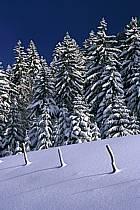 Forêt, Jura, Alpes, ref aa2333-32LE