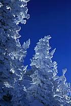 Snowbird, Utah, ref aa2915-15GE