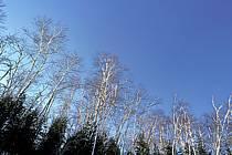 Forêt Québécoise, ref aa3099-06LE